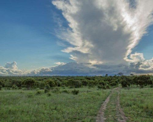 Klaserie Game Reserve landscape