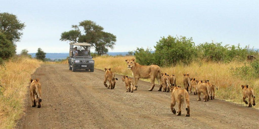 Lion sighting in Kruger National Park