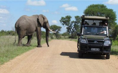 Elephant on a Kruger Park game drive
