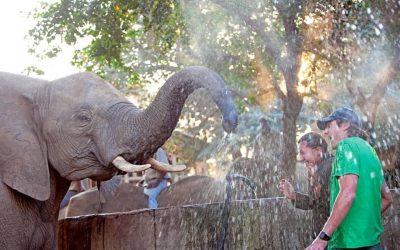 Elephant Whispers Hazyview