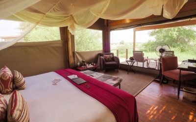 Kalahari Plains Room