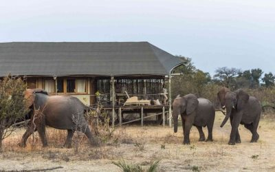 Elephant walking past the tent at Toka Leya Camp