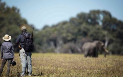 Walking safari Hwange