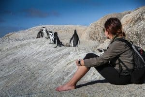 Penguin viewing at Boulders Beach