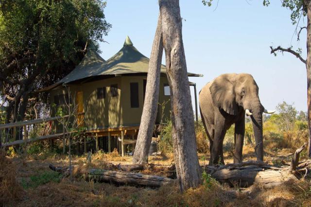 Elephant Little Vumbura