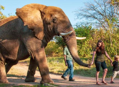 Elephant Sanctuary Hazyview