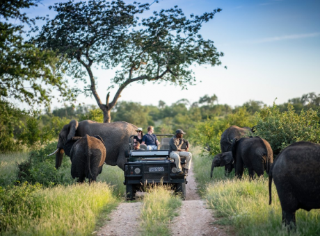 Game drive in the Timbavati Game Reserve