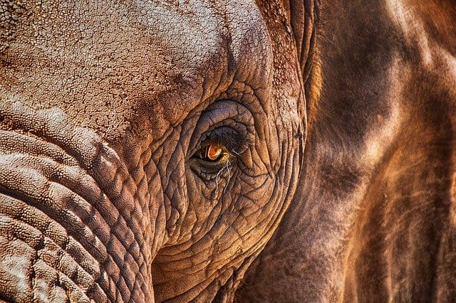 Close-up Of An Elephants Eye On A Zambia Safari