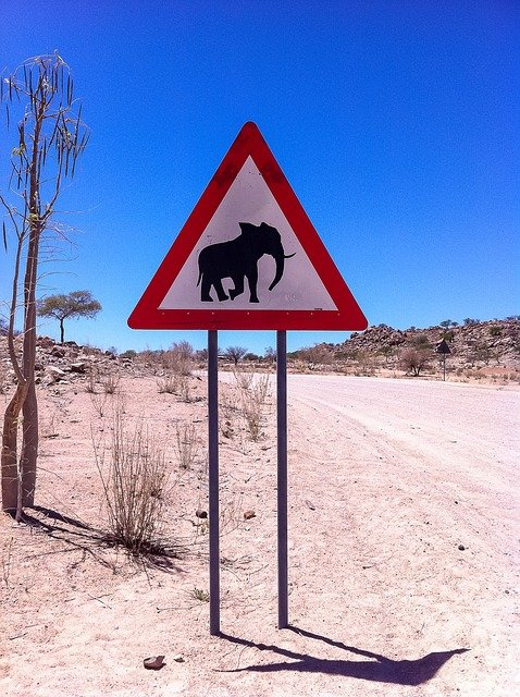Elephant Crossing In Namibia