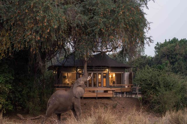 Elephant Feeding In Front Of Camp, Mana Pools