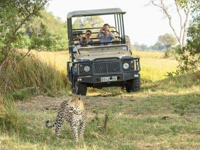 A safari drive in The Okavango Delta with Moriti Safaris