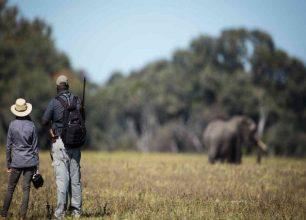 Walking safari in Hwange National Park