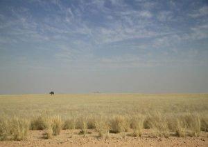Central Kalahari landscape